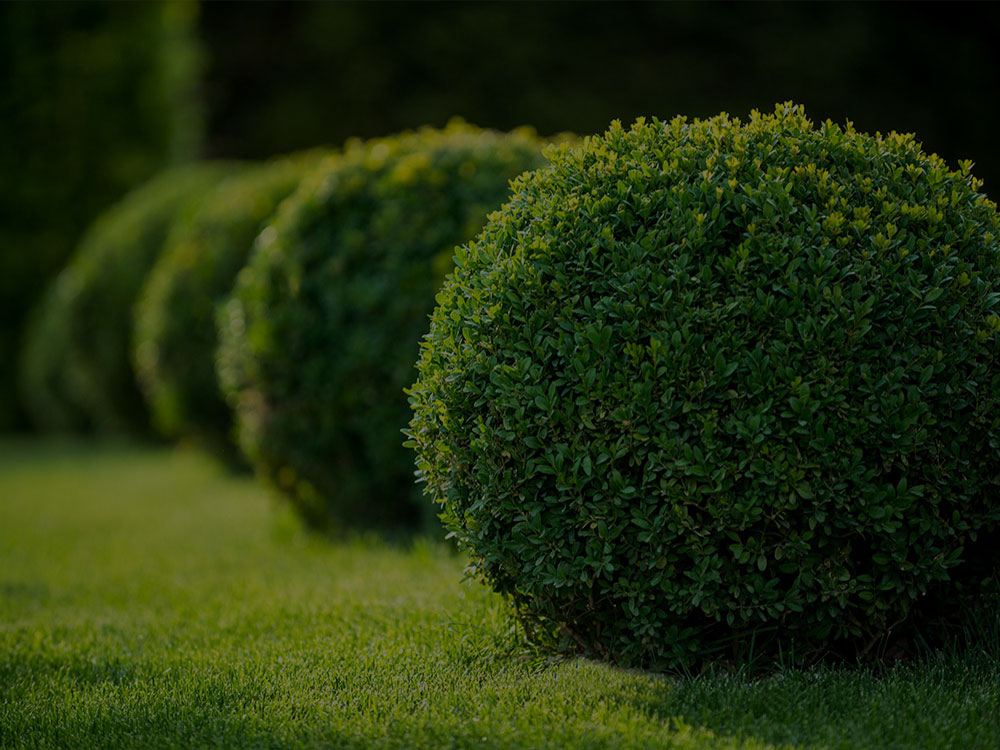Brodheadsville Landscaping