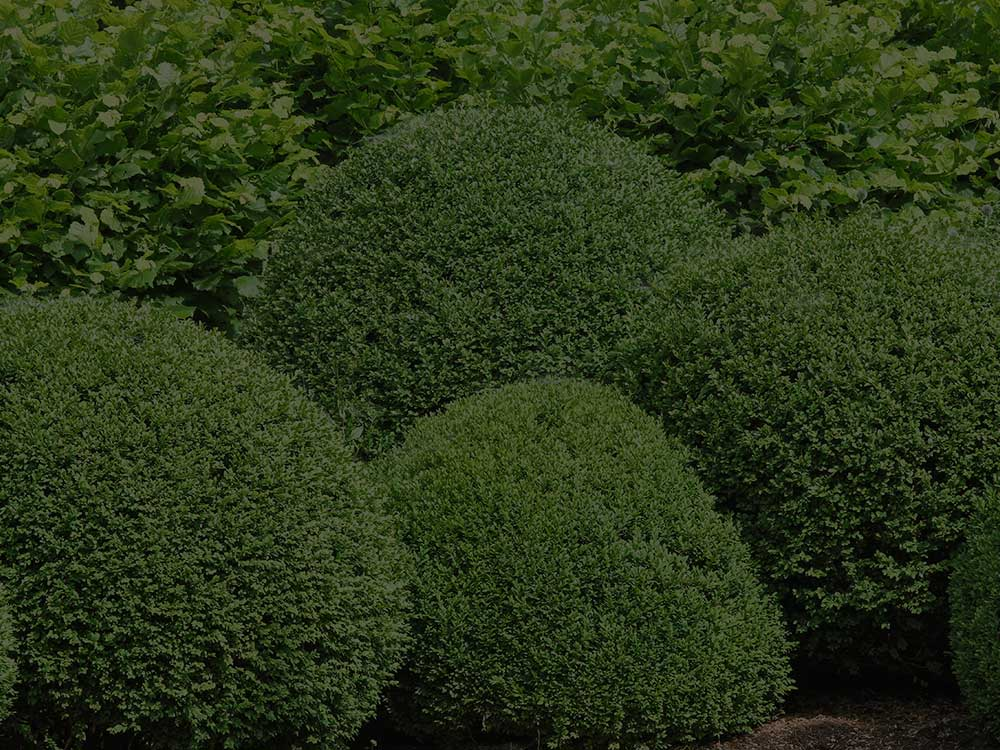 Stroudsburg Shrubs and Hedges