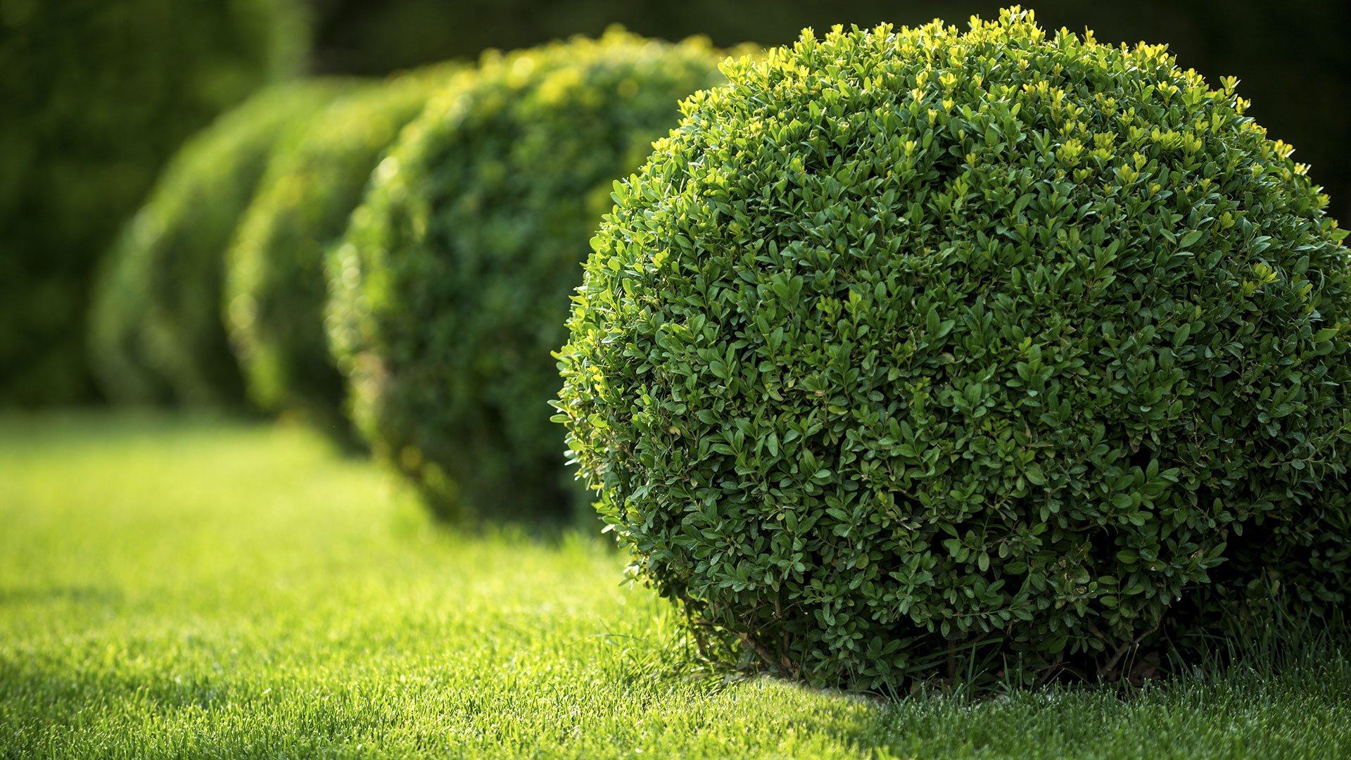 Greenscapes Lawn Services & Landscape Design Lawn Maintenance, Landscaping and Lawn Care slide 1